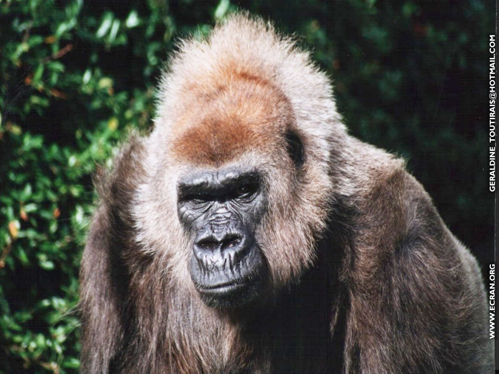 Fond d 39 cran de animal sauvage par g raldine 0002 - Images d animaux sauvages gratuites ...
