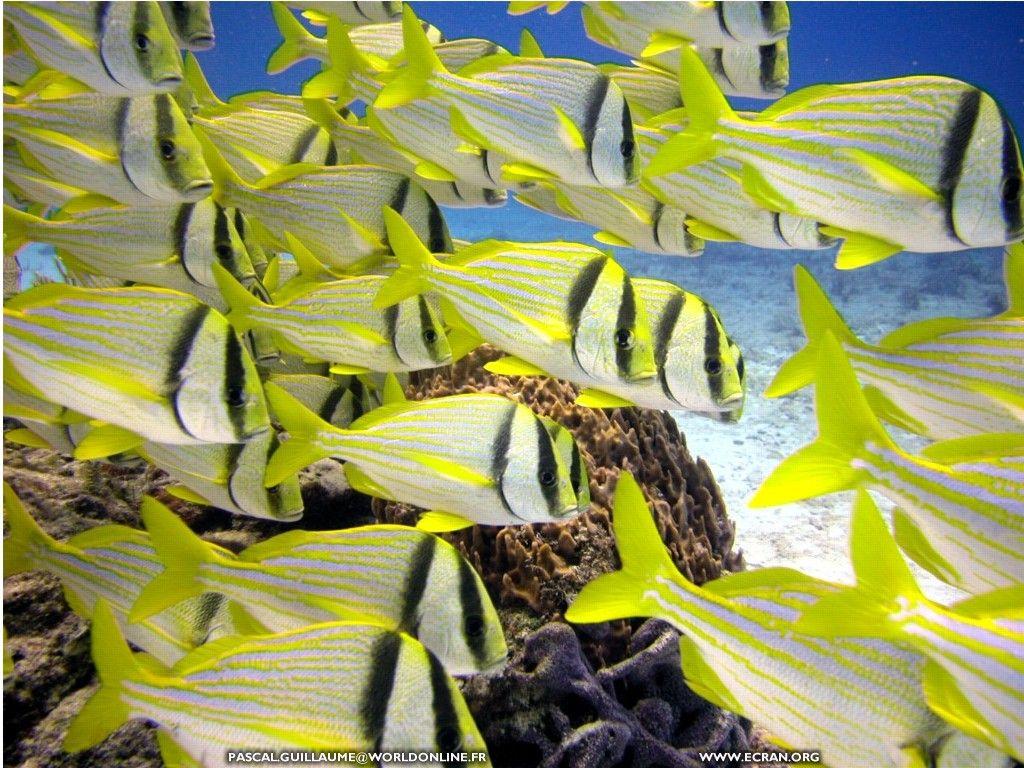 Fonds d écran plongee-sous-marine-mexique - de pascal guillaume