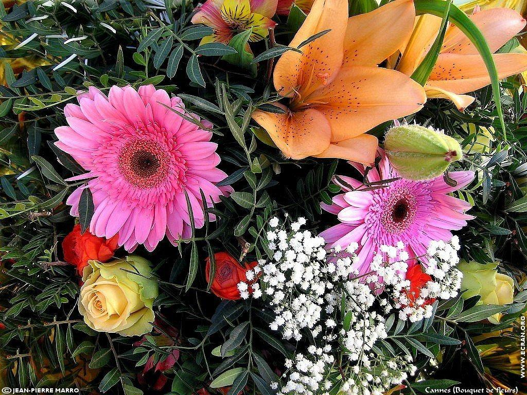 Fond D Ecran De Bouquets De Fleurs Cote D Azur Provence Par Jean