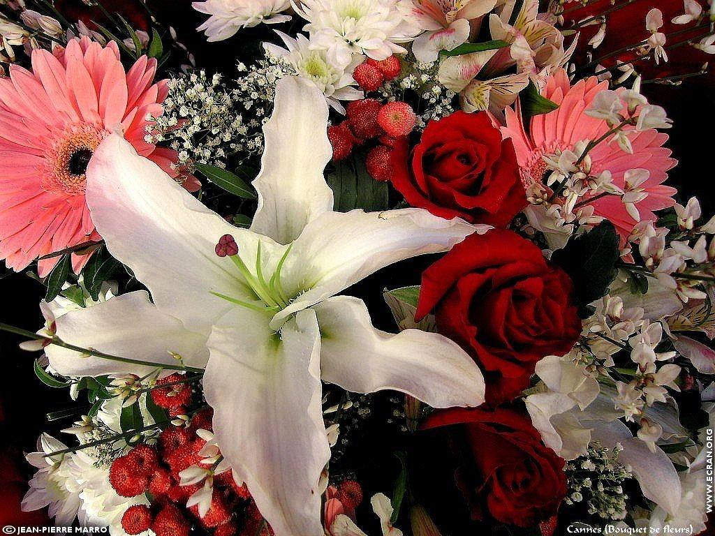 fond d 39 cran de bouquets de fleurs cote d 39 azur provence par jean pierre marro 0005. Black Bedroom Furniture Sets. Home Design Ideas