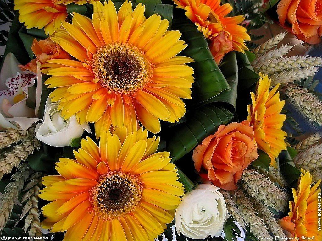 fond d 39 cran de bouquets de fleurs cote d 39 azur provence par jean pierre marro 0003. Black Bedroom Furniture Sets. Home Design Ideas