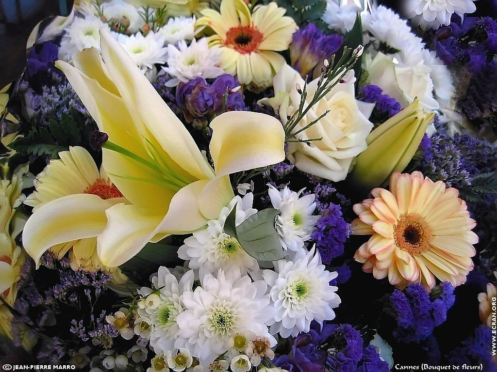 fond d 39 cran de bouquets de fleurs cote d 39 azur provence par jean pierre marro 0004. Black Bedroom Furniture Sets. Home Design Ideas